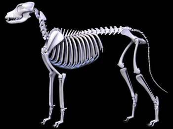 dog_skeleton